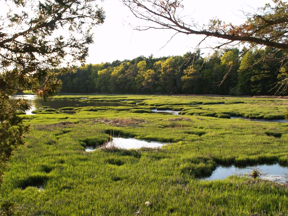 Marsh at Adams Point (photo by Webmaster)