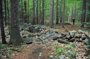 Old stone wall along the trail to the black gum swamp (photo by Ben Kimball)