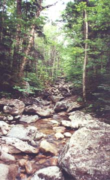 Coppermine Brook (photo by Webmaster)