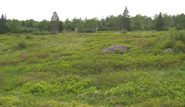 Meadow along Coastal Trail (photo by Webmaster)