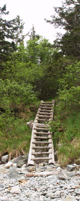 Ladder leading up from cobble beach back to Coastal Trail (photo by Webmaster)
