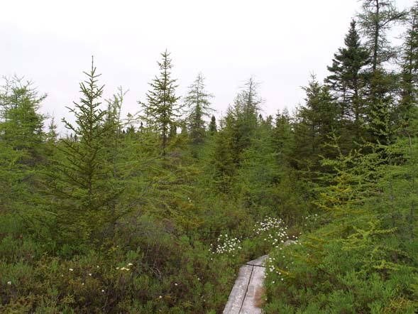 Bog along Inland Trail (photo by Webmaster)