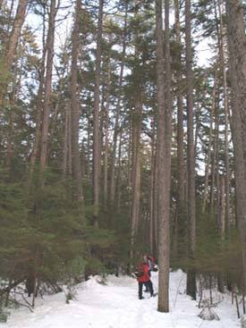 Patty and Kathy on Lower Nanamocomuck Ski Trail (photo by Webmaster)