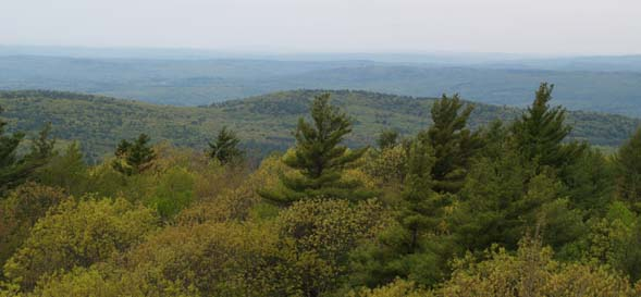 Views from Mount Grace's fire tower (photo by Webmaster)