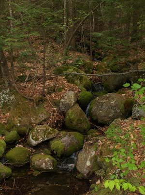 Rocky stream on Round-the-Mountain Trail (photo by Webmaster)