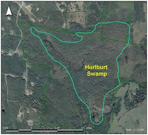 Hurlbert Swamp color aerial photo