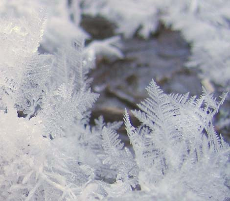 Ice crystals (photo by Mark Malnati)