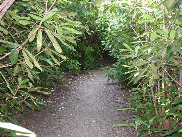 Rhododendron tunnel (photo by Robin Hood)