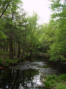 West Branch of Ware River (photo by Webmaster)