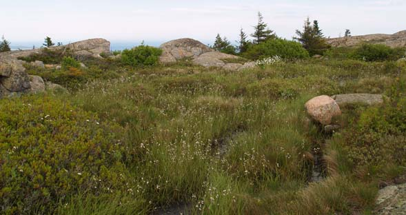 Boggy area near the summit of Pemetic Mountain (photo by Webmaster)