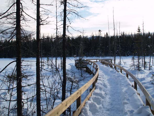 Viewing platform at Mud Pond (photo by Webmaster)