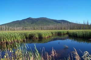 Moorhen Marsh and Cherry Mountain (photo by Ben Kimball for NH Natural Heritage Bureau)