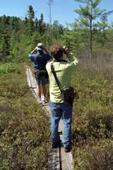 Birding at Ponemah (photo by Ben Kimball for the NH Natural Heritage Bureau)