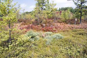 Kettle hole bog peatland system at Ponemah Bog (photo by Ben Kimball for the NH Natural Heritage Bureau)