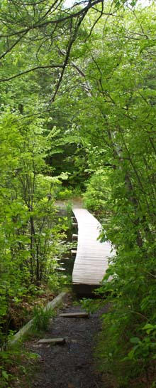 Footbridge over Echo Pond (photo by Webmaster)