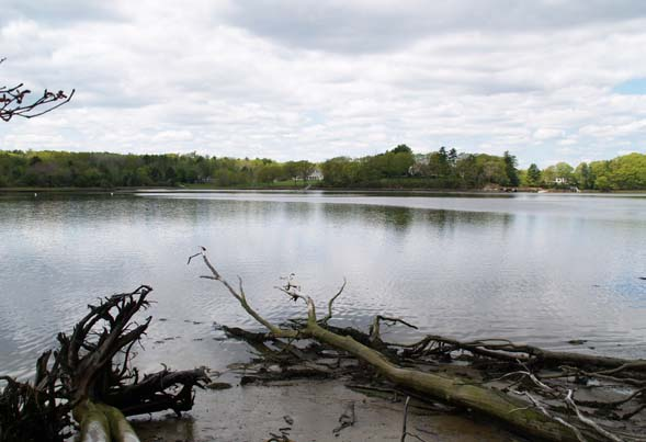 View of Oyster River from the woods trail (photo by Webmaster)