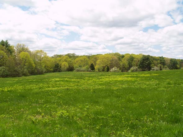 View of the fields from one of the mowed meadow paths (photo by Webmaster)