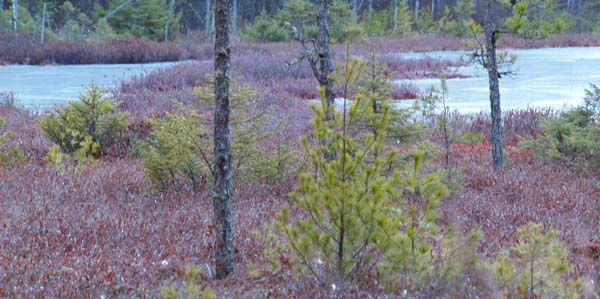 Black Spruce Bog (smaller pond) (photo by Webmaster)