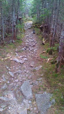 Trail with a grouse on it (photo by Bill Mahony)