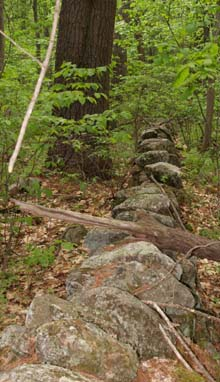 Stone wall along the Midstate Trail (photo by Webmaster)
