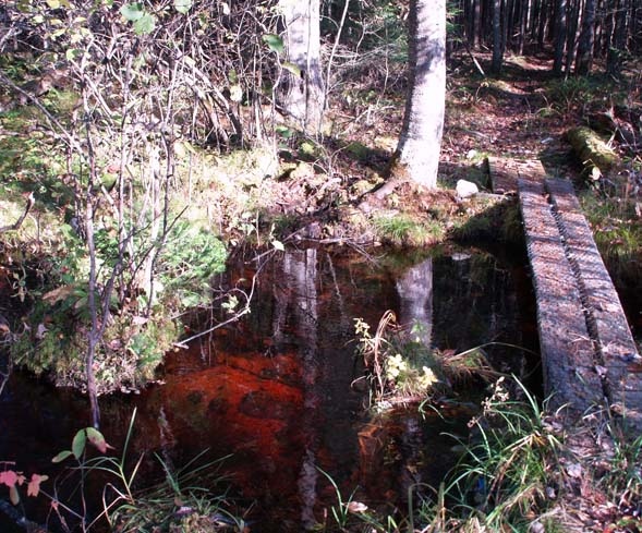 Bog bridge on Colonel Whipple Trail / Cohos Trail (photo by Webmaster)