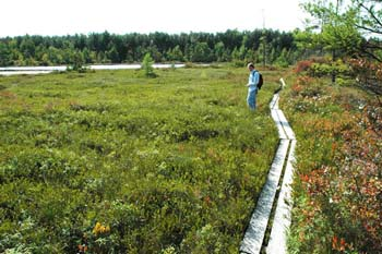 Kettle hole bog system (photo by Ben Kimball for the NH Natural Heritage Bureau)