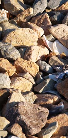 Rocks and shells on the gravel bar in Ship Harbor (photo by Webmaster)