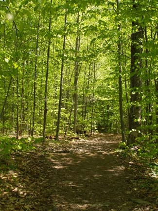 Trail through the Willmarth Woods section of Snake Mountain (photo by Webmaster)
