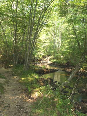 Trail alongside Falls River (photo by Webmaster)