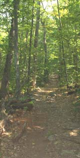 Trail between Falls River Road and old picnic area (photo by Webmaster)